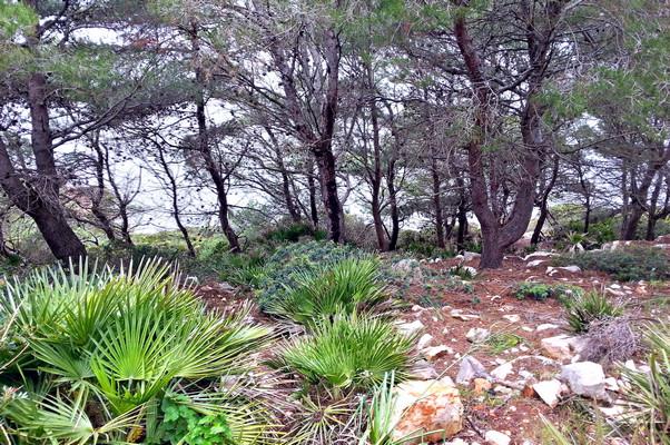 Hinter den Bäumen rauscht das Meer (© Redaktion - Portanapoli.com)