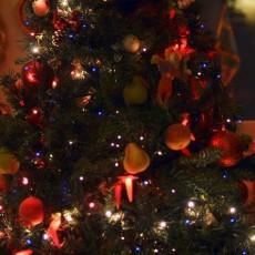 Am Weihnachtsbaume die Zitronen hängen