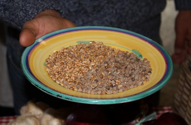 Das Getreide Maracuccio ist eine wichtige Zutat